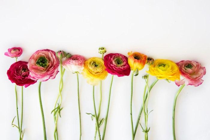 un-blog-une-fille-fleurs-alignées