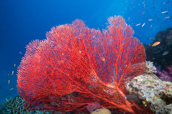 corail-rouge_3108_855521875