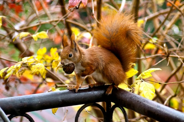 15-kifs-petits-plaisirs-automne-bright-pause-blog-0